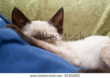 Sleeping kitten with blanket