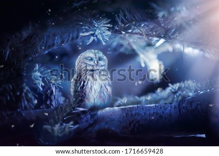 Sleeping owl in fantasy enchanted fairy tale spruce forest and moon light rays shine through the branches, funny cute bird sitting on twig of fir tree in deep dark blue fairytale fabulous magical wood