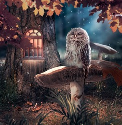 Sleeping owl sitting on mushroom in fantasy enchanted fairy tale pine forest and moon rays shine through the branches, funny cute bird, elf or gnome house in tree in deep dark fairytale magical wood