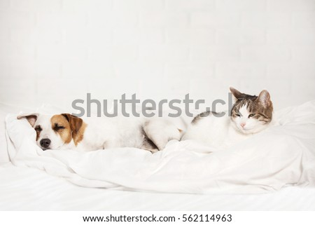 Sleeping pets on bed. Cat and dog