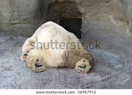 Sleeping polar bear in the Moscow Zoo