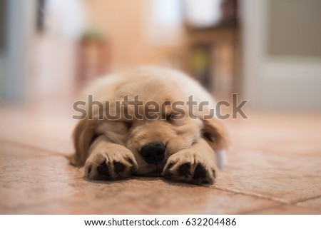 Sleeping Puppy #632204486
