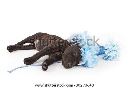 Sleeping puppy in a fancy blue party hat isolated on white
