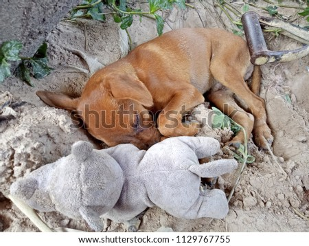 Sleeping Puppy with a rhino doll #1129767755