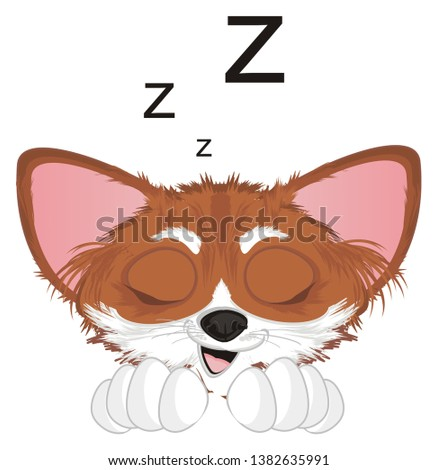 sleeping snout of chihuahua with letters z