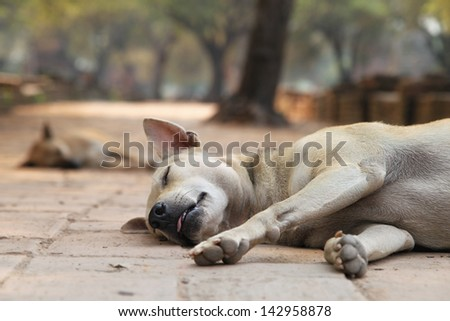 sleeping stray dogs in the shadows of Wat Phra Si Sanphet in historical park in Ayutthaya (ancient capital of Thailand)