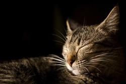 Sleeping striped cat under natural lighting