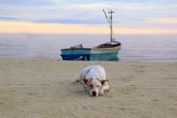 sleeping Thai white dog on the beach with fishing boat at Hua Hin, Thailand