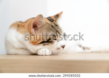 Older cat lethargic not eating or drinking