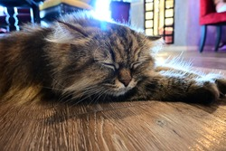 Sleepy cat - Closeup portrait of cute cat