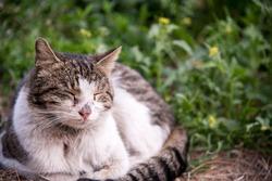 sleepy cat in green grass in spring garden