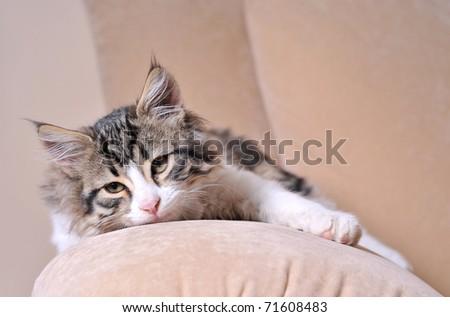 Sleepy kitten looking up