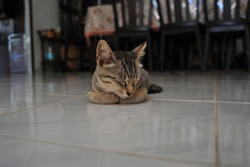 Sleepy little kitty taking a catnap inside the house with selective focus