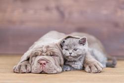 Sleepy puppy hugging kitten on wooden background