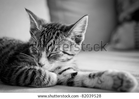 sleepy young cat