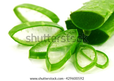 Slice Aloe Vera (Aloe barbadensis Mill.,Star cactus, Aloe, Aloin, Jafferabad or Barbados) a very useful herbal medicine for skin care and hair care. #429600592