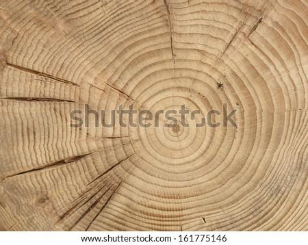 slice from a fir tree
