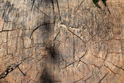 Slice of an old tree, natural background