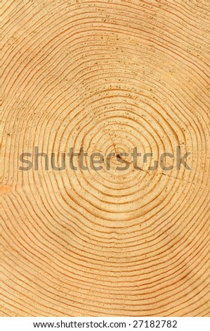 slice of wood timber natural background - stock photo