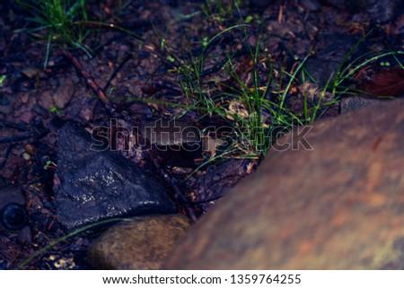 Slick and glistening rocks on a rainy day.