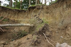 Slide Soil Erosion, Row of Trees Exposed to Seaside Cliff Face Erosion with Crumbling Earth and Dirt, Climate Change Sea Levels, Uprooted Trees Lying on Sand Cause by Coastal Erosion, Landslide