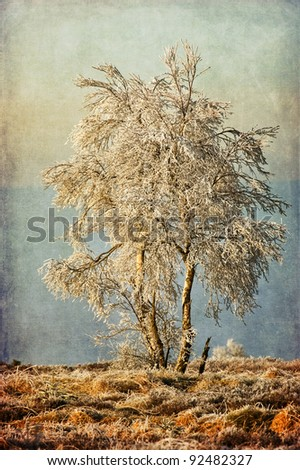 slightly grunge textured picture of a wintry birch tree in a marsh landscape with hoarfrost