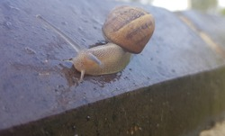 Slimy snail on a brick wall in the garden