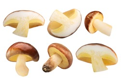 Slippery Jack mushrooms (Suillus luteus fruit bodies) cut in half and whole, isolated
