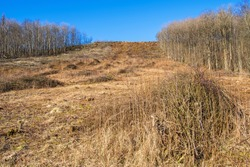 Slope on a hill with felled trees