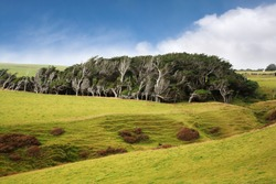 Slope Point, the southernmost point of New Zealand's South Island, where the macrocarpa (Monterey Cypress) trees have become distorted by the wind howling in across the Southern Ocean.
