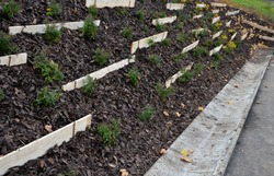 Slope stabilization by vegetation planting of shrubs. so that the mulch bark does not slide down by erosion, the whole hill is supported by planks and metal nails.