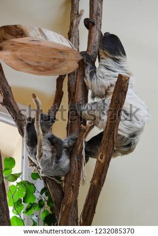 Sloth Animal Photo