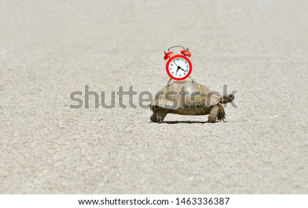 Photo of  Slowness and sluggishness in business concept with turtle holding alarm clock on a shell and slowly crawling over asphalt road