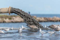 Sludge Pollution Pouring into the Baltic Sea and Seagulls