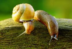 Slug and a snail