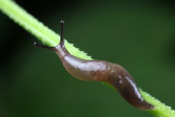 Slugs live on wild plants, North China