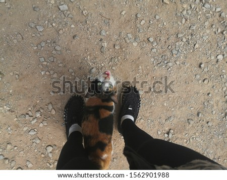sly cat looking up at beautiful female legs in black shoes on ground. Asian anime style concept. Women wearing Hiking shoes with cat.