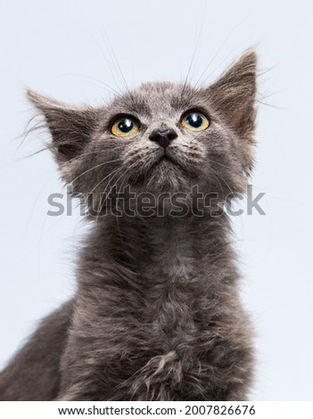 sly face of a kitten looking up Stock fotó ©