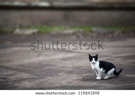 small abandoned kitten in the yard, loneliness, sadness, depression