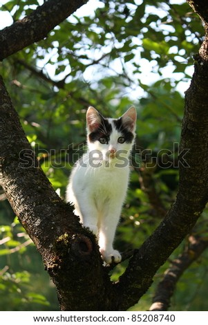 Small adorable kitten on the tree