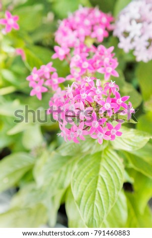Small pink star shaped flowers image collections flower decoration free photos pink star shaped flowers are beautiful avopix small and beautiful flowers 791460883 mightylinksfo mightylinksfo
