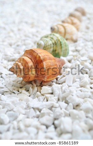 Small and big sea shell on the beach