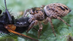 small and cute beautiful friendly spider with big eyes