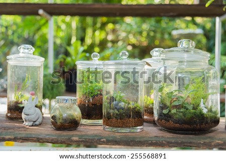 small and little plants decorate in glass bottle
