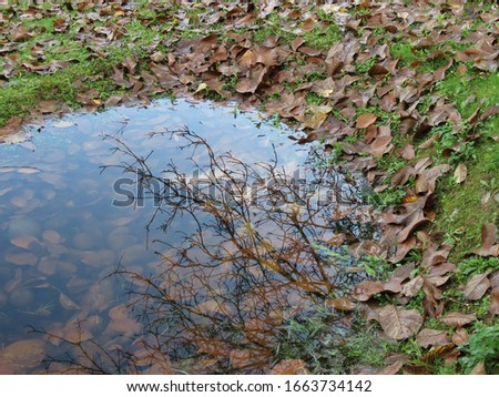 Small and shallow rainwater drainage pond in a park, with pebbles visible through water, view from waterside towards shore, autumn leaves in water, bare tree branches reflecting Photo stock ©