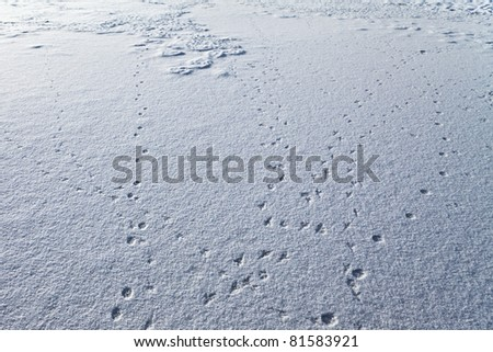 Small animal trails on snow