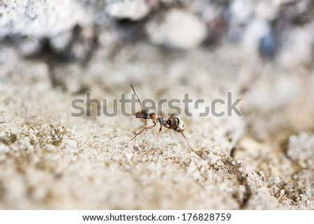 Small ant on a cement surface with cement background