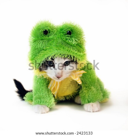 small baby kitten dressed up in Frog Costume looking mad isolated on a white background