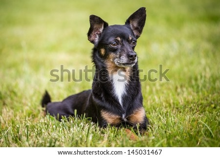 small back dog