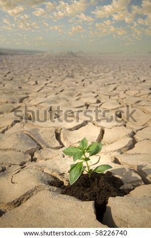 small Basil plant in apile of soil on a cracked soil surface